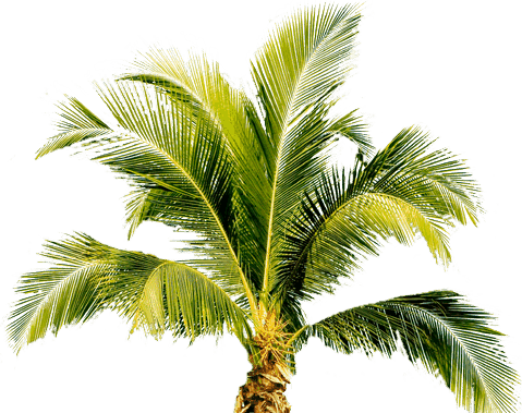 Buy a property from 30A to Panama City Beach, Florida, and enjoy palm trees like this one